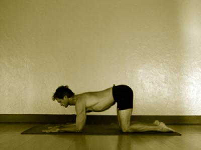 pincha mayurasana  mark stephens yoga